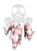 Porcine Animal Framed Prints - Swine Flu Protection, Conceptual Image Framed Print by Victor Habbick Visions