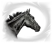 Thoroughbred Drawings - Swinger by Lucka SR