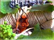 Grape Jewelry Metal Prints - Swirl and Rope Metal Print by Chara Giakoumaki