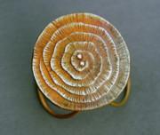 Swirl Bronze Ring Print by Mirinda Kossoff