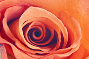 Fine Art Photography Prints - Swirl Print by Roberta Murray