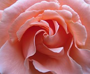 Blending Photos - Swirling in Pink by Pat Yager