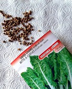 Swiss Chard Seeds Print by Will Borden