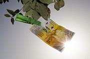 Money Prints - Swiss franc hanging in a tree Print by Mats Silvan