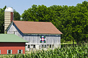 Quilt Barn Prints - Swiss Star Print by Betty Eich