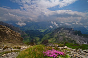 Summer Flowers Photos - Switzerland Mountains by Debra and Dave Vanderlaan
