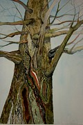Tree. Sycamore Paintings - Sycamore by Barbara Daugherty