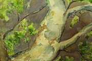 Sycamore Paintings - Sycamore Branch by Gretchen Gackstatter