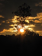 Shane Brumfield Art - Sycamore Sunset by Shane Brumfield