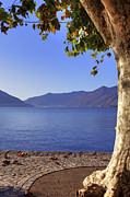 Contemplation Metal Prints - sycamore tree at the Lake Maggiore Metal Print by Joana Kruse