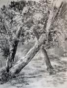 Texas Drawings - Sycamore Tree in Goliad State Park by Karen Boudreaux