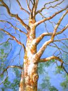 Tree. Sycamore Paintings - Sycamore Tree with a Memory by Patricia Allingham Carlson