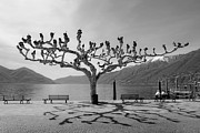 Benches Prints - sycamore trees in Ascona - Ticino Print by Joana Kruse