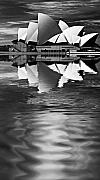 Sheila Smart Framed Prints - Sydney Opera House reflection in monochrome Framed Print by Sheila Smart
