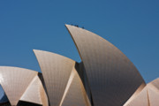 Edifices Posters - Sydney Opera House Sails Poster by John Buxton