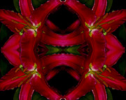 Concentration Digital Art - Symmetry Botany by Valeriy Krey