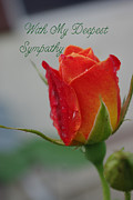 Sympathy Metal Prints - Sympathy Josephs Coat Rosebud Metal Print by Robyn Stacey