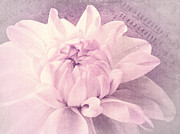Angela Doelling AD DESIGN Photo and PhotoArt - Symphony in pink