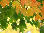 Symphony Of Autumn 23 Print by France Laliberte