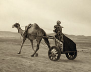 Drawn Photo Prints - SYRIA: CAMEL RACE, c1938 Print by Granger