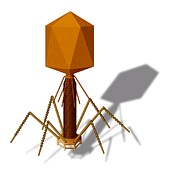 Pathogen Art - T4 Bacteriophage, Artwork by Art For Science
