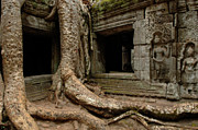 Cambodia Photos - Ta Prohm Silence 2 by Bob Christopher
