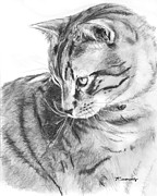 Ginger Drawings Posters - Tabby Cat in Profile Drawing Poster by Kate Sumners