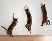 Three Framed Prints - Tabby Cat Jumping Framed Print by Hulya Ozkok