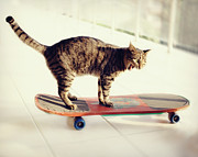 Standing Framed Prints - Tabby Cat On Skateboard Framed Print by Hulya Ozkok