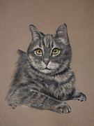 Purebred Pastels Framed Prints - Tabby Cat Framed Print by Patricia Ivy