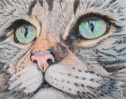 Striped Drawings - Tabby Cat by Yvonne Johnstone