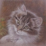 Dorothy Coatsworth Painting Posters - Tabby Kitten Poster by Dorothy Coatsworth