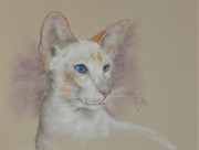 Red Point Siamese Posters - Tabea Poster by Cori Solomon