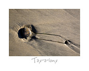 Sand Art Prints - Tag-A-Long Print by Peter Tellone