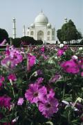 Manicured Prints - Taj Mahal Flowers Print by Michael Howell - Printscapes