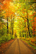 Fall Road Photos - Take A Walk by Emily Stauring
