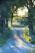 Country Lanes Photo Metal Prints - Take Me Home Metal Print by Jan Amiss Photography