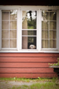 Abandoned Pets Photos - Take me with you. by Patrick English