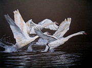 Geese Drawings - Take-off by Marita Lipke