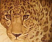 Cat Eyes Pyrography Prints - Take One Step Closer Print by Jo Schwartz