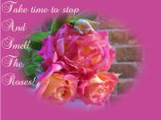 Love - Take Time Roses by Dawn Hay