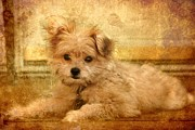 Puppy Digital Art - Taking A Break by Angie McKenzie