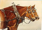Horses In Harness Prints - Taking A Break Print by Cj Sky