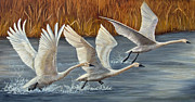 Migrating Birds Originals - Taking Off by Dee Carpenter