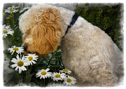 Doggy Framed Prints - Taking Time To Smell The Flowers Framed Print by Susan Candelario