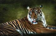 Saija  Lehtonen - Tale of a Tiger