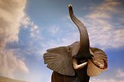 Talking Elephant Print by Marilyn Hunt