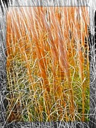 Robin Huggins - Tall Fall Grasses