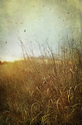 Harvested Metal Prints - Tall grass growing in late autumn Metal Print by Sandra Cunningham