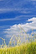 Cloudy Photo Prints - Tall grass on sand dunes Print by Elena Elisseeva